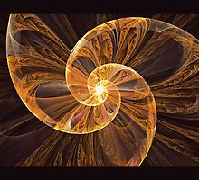 Seashell by Pam Amos