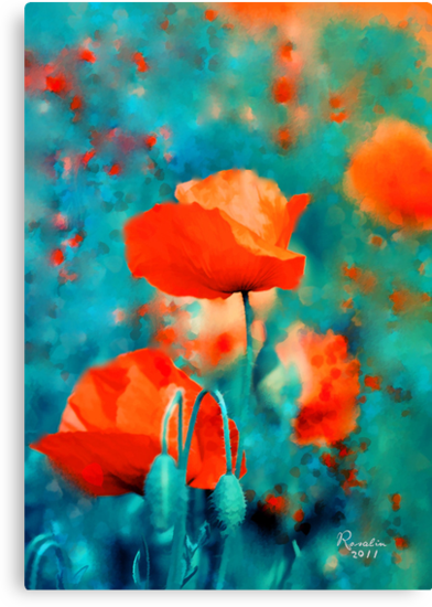 Poppies by rosalin