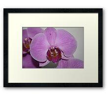 Sogo Cherry Orchid Framed Print