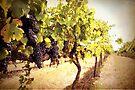 Vintage Vines by yolanda