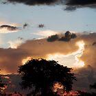 Lowveld sunset by Gigi Guimbeau