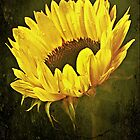 Petals Of A Sunflower. by Aj Finan