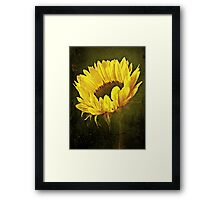 Petals Of A Sunflower. Framed Print