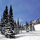 Pines at Whistler by Charles Kosina