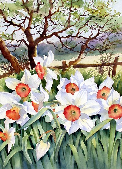 Narcissi in a field by Ann Mortimer
