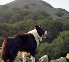 Indy in the hills by Michael Haslam