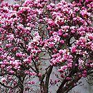 Cherry Blossom Tree by Mistyarts