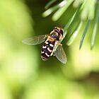 Fly by RosiLorz