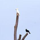 A white and black bird by Liza Barlow