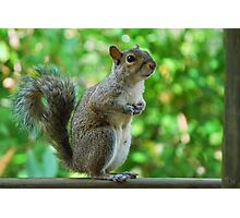Excuse please, can spare a peanut? Photographic Print