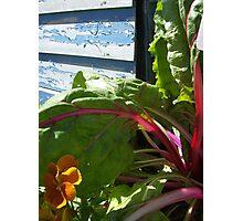 Rustic Blue Garden - Denver Botanic Gardens Photographic Print