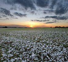 Bildeston sunset #1 by Christopher Cullen