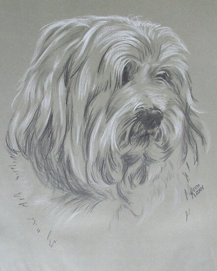 Havanese by BarbBarcikKeith