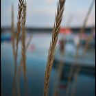 Straw on the bay by Chloé Ophelia Gorbulew