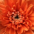 Orange dahlia by Kevin Allan