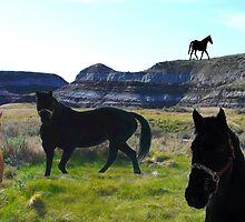 Horses in the Badlands by MaeBelle