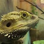 Jerry the Bearded Dragon by Michaela1991