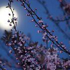 Cherry Blossom Moon by pix-elation