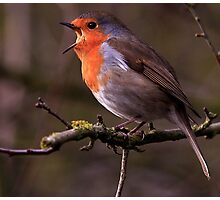 Spring Chorus  Photographic Print