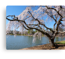 Weeping Willow in Bloom  Canvas Print