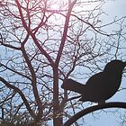 Black Bird by kersey