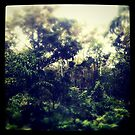 My Backyard by Jules Campbell