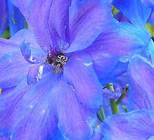 Delphinium - Sapphire by ArundelArt