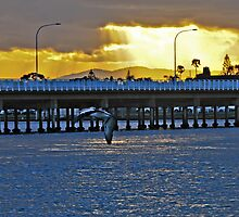 Pelican sunset, Forster by bazcelt
