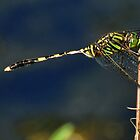 Green Dragonfly  by Karen Waples