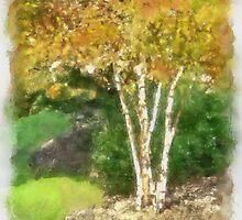 River Birch by Kenneth Hoffman