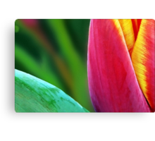 A Paintbrush of Tulip Petals Canvas Print