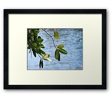 Alligator Creek Framed Print