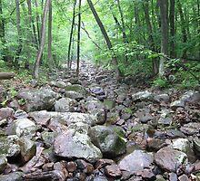 Stony Brook by Gu88dek