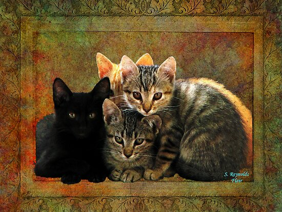 Four Kitty Pile-up by Sharksladie