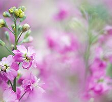 Sweet Spring Stocks by Jacky Parker