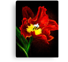 The Red Tulip Canvas Print