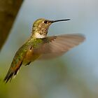 FEMALE RUFOUS HUMMINGBIRD by Sandy Stewart