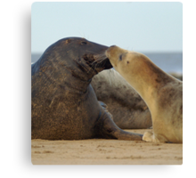 Sealed with a kiss (Donna Nook, Lincs) Canvas Print