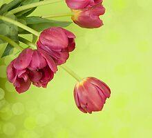 Spring tulips. by Ligak