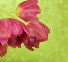 Purple tulips. by Ligak