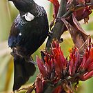 Tui and Flax - New Zealand by Kimball Chen