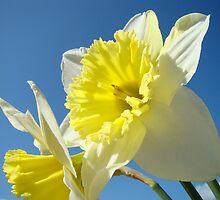 Spring Sunny Daffodil Flower Blue Sky art Baslee Troutman by BasleeArtPrints