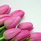 Pink Tulip Bouquet by MindyLinford