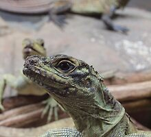 REPTILES @ TARONGA ZOO SYDNEY by briangardphoto