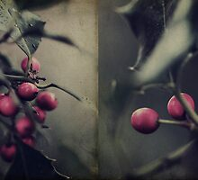 Holly Berries by Citizen