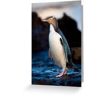 Yellow-eyed Penguin - New Zealand Greeting Card