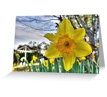 Narcissus Glory Greeting Card