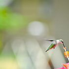 The Hummingbird II by NinaBees