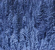 """Cold Wintery Forest"" by Breanna Stewart"