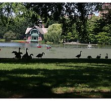 The Harlem Mere -Central Park by photographist